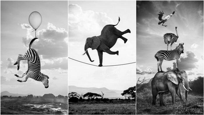 Акуна Матата. Серия фотографий диких животных от Томаса Сабтила