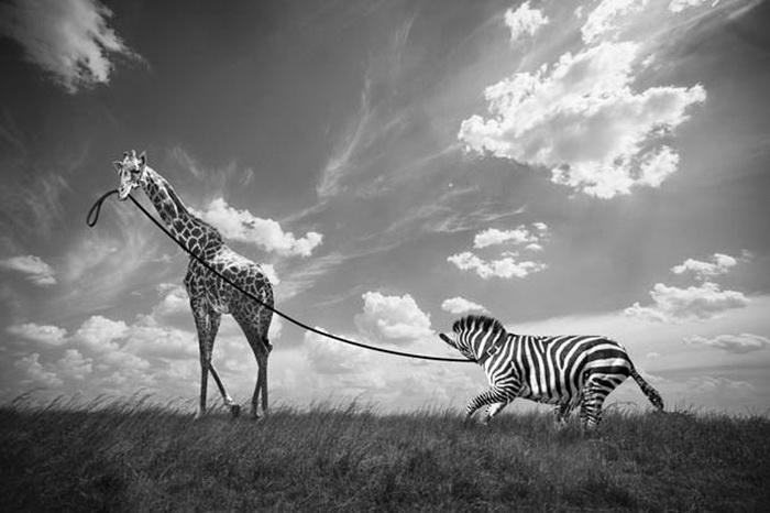 Беззаботные фотографии диких животных от Томаса Сабтила