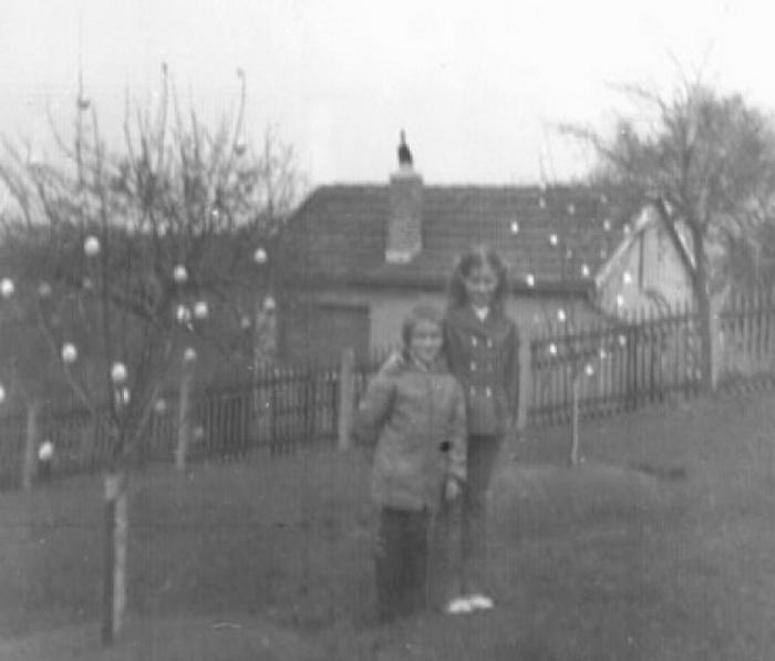 1970 год: первые 15 яиц на яблоне