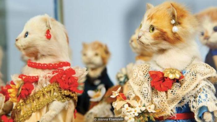 Жутковатые чучела котят