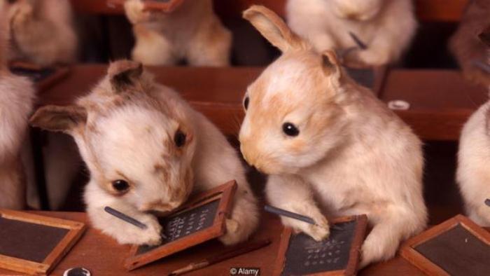 Школа кролей - еще один проект Уолтера Поттера