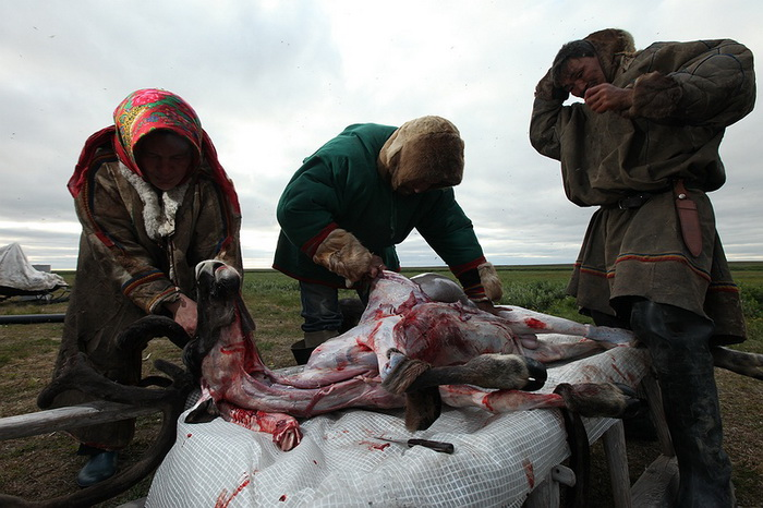 Женщины разделывают тушу оленя
