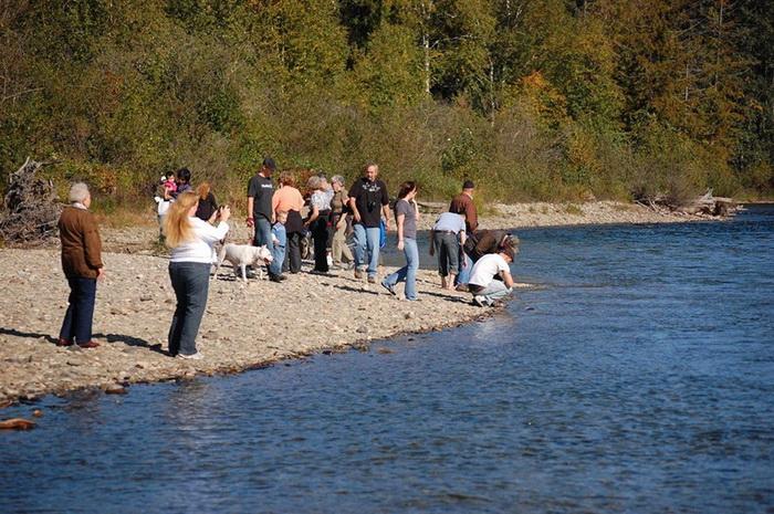 Раз в четыре года туристы презжают на реку Адамс, чтобы увидеть невероятное природное явление