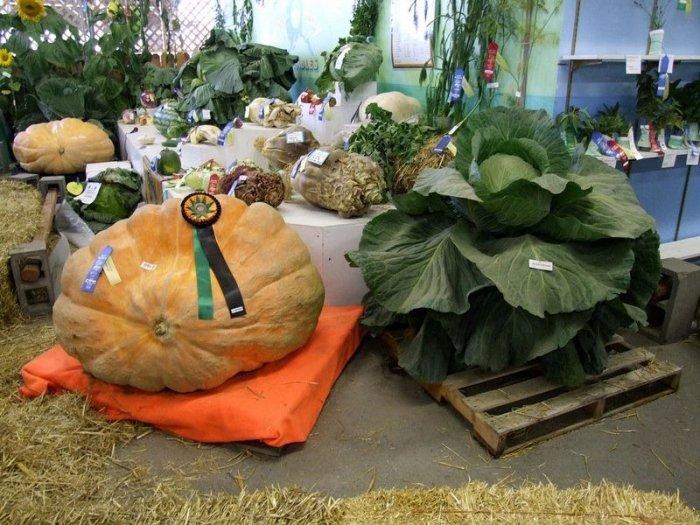Огромные тыквы и капусты, фестиваль-2009