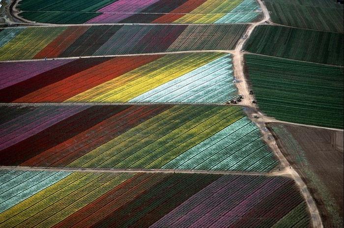 Алекс МакЛин - мастер аэрофотосъемки. Цветочные поля в Калифорнии, 1989