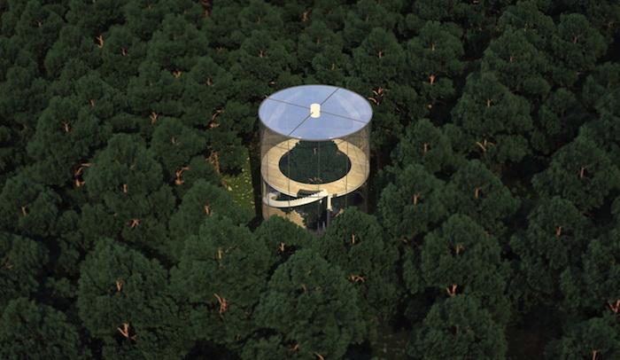 Дом в еловом лесу