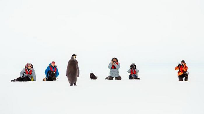 Фоторепортаж с борта «Академика Шокальского» от Andrew Peacock