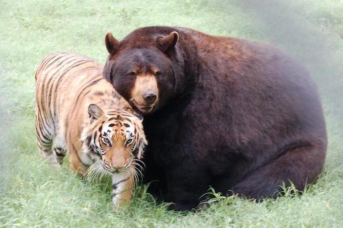 https://static.kulturologia.ru/files/u12645/animals-friendship-8.jpg