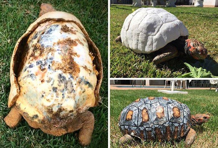 10 невероятных историй спасения животных в 2016 году
