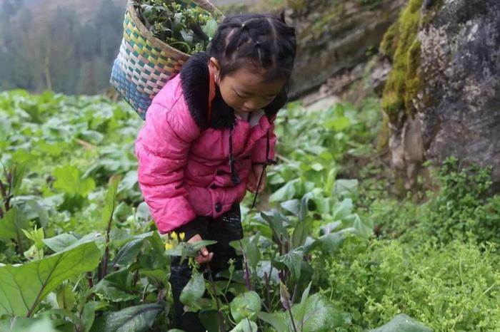 Анна собирает овощи