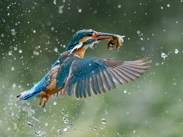 Лучшая фотография конкурса B&H Wilderness Photo Competition