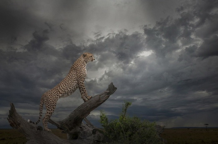 B&H Wilderness Photo Competition. Фотограф Giorgia Karampatou, Абу-Даби
