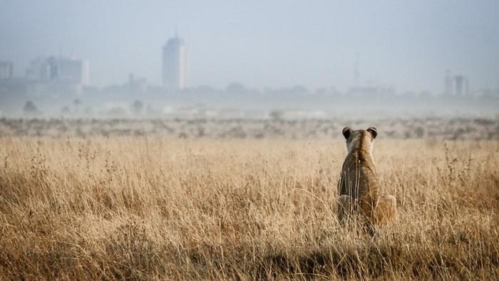 B&H Wilderness Photo Competition. Фотограф Jeffrey Kirkpatrick, Австралия