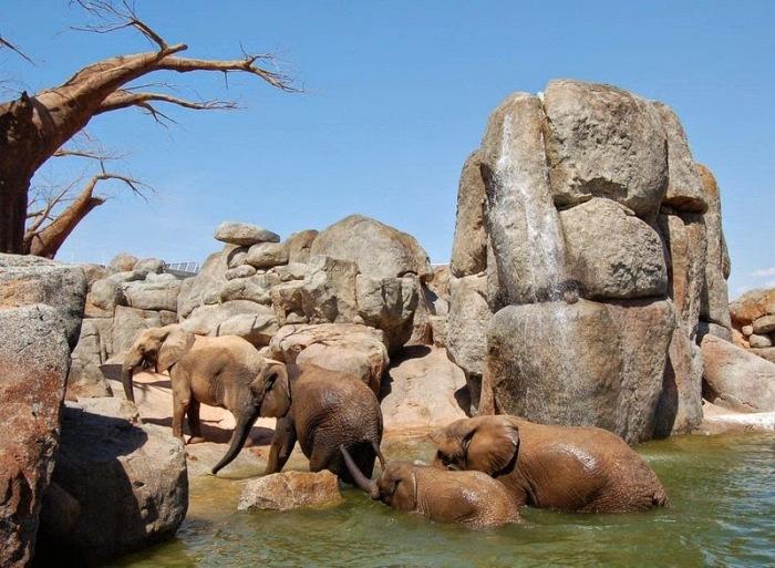 Животные без клеток: необычный зоопарк в Валенсии