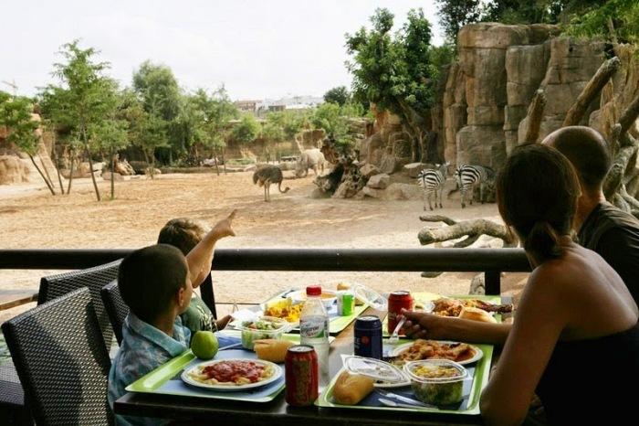 Посетители могут наблюдать за жизнью животных
