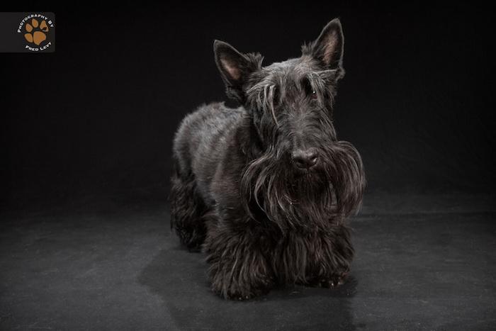 Черные псы в фотоцикле Фреда Леви (Fred Levy)