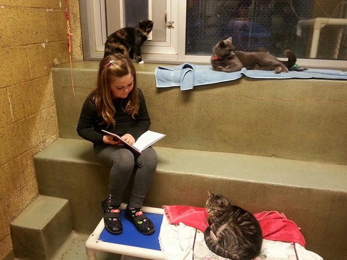 Процесс обучения чтению