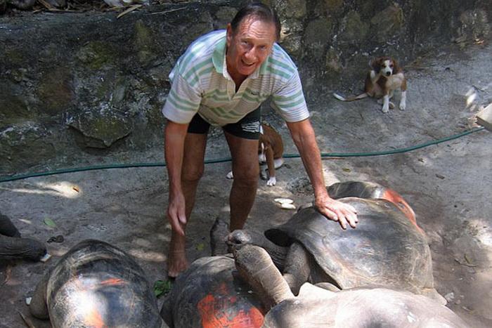 Гигантские черепахи, которых разводит Брендон Гримшоу на необитаемом острове