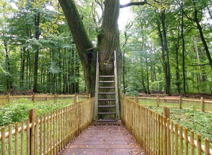 Дерево Любви: самый романтичный дуб в мире