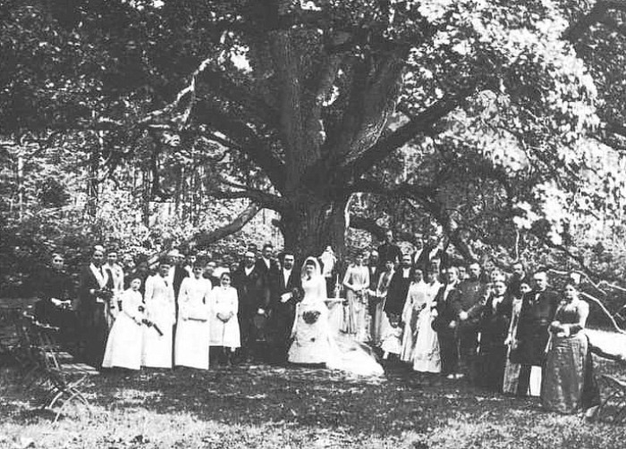 Свадебная церемония возле Дерева Любви