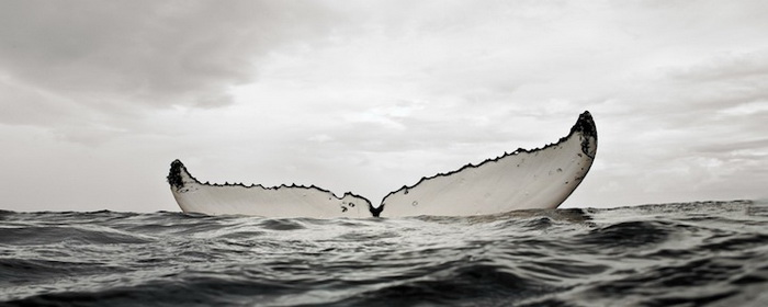 Брайан Остин разместил уникальные снимки в книге под названием *Красавец кит*