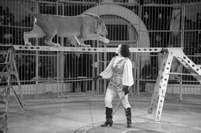 Выступление с дрессированными львами, 1957 год | Фото: ria.ru