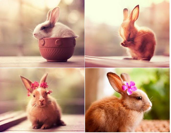 Фотографии очаровательных кроликов