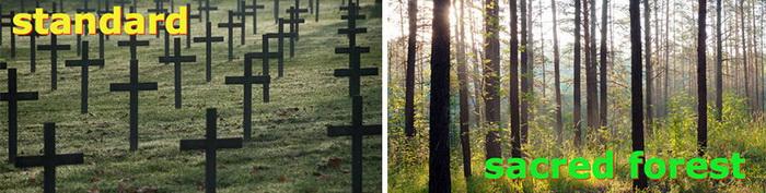 Зеленая роща вместо привычного кладбища