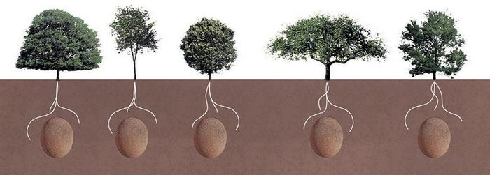 Гробы-капсулы и разные виды деревьев