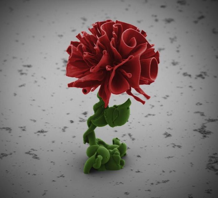 Цветы, созданные при помощи нанотехнологий