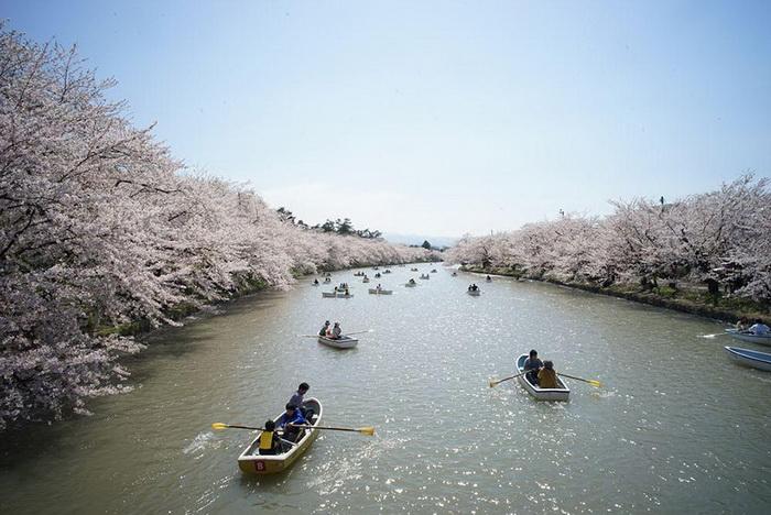 Фестиваль цветения сакуры. Фотограф Ryan WH