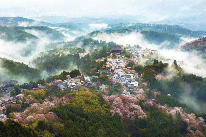 Страна тумана. Фотограф Yoshiki Fujiwara