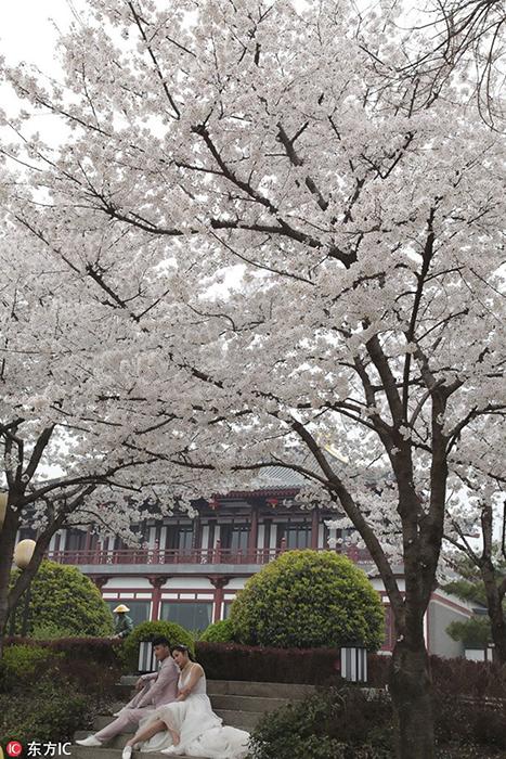 Свадебная фотография на фоне цветущих деревьев.