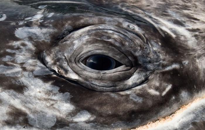 Завораживающий глаз