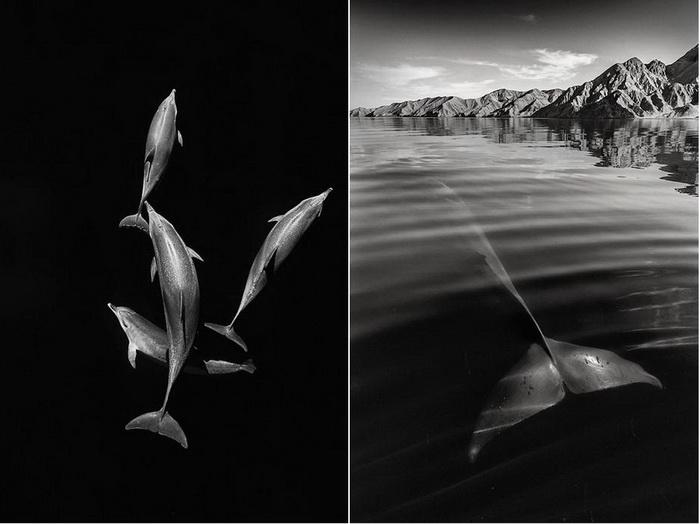 Подводный мир на фотографиях Кристофера Сванна