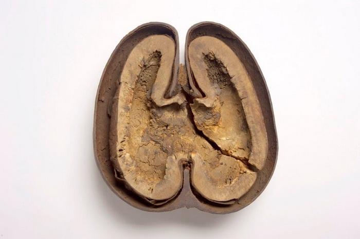 Внутренность ореха.