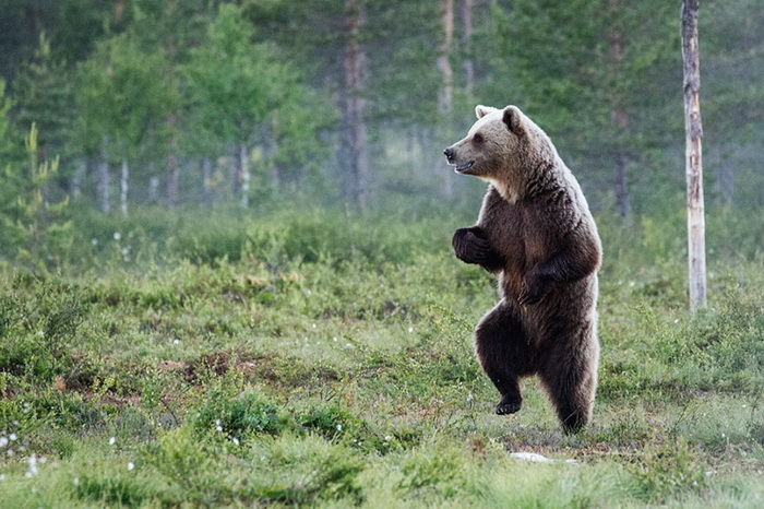 Конкурс на самое забавное фото диких животных The Comedy Wildlife Photography Awards 2016