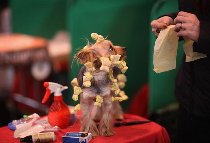 Всемирная выставка собак *Крафт* в Великобритании