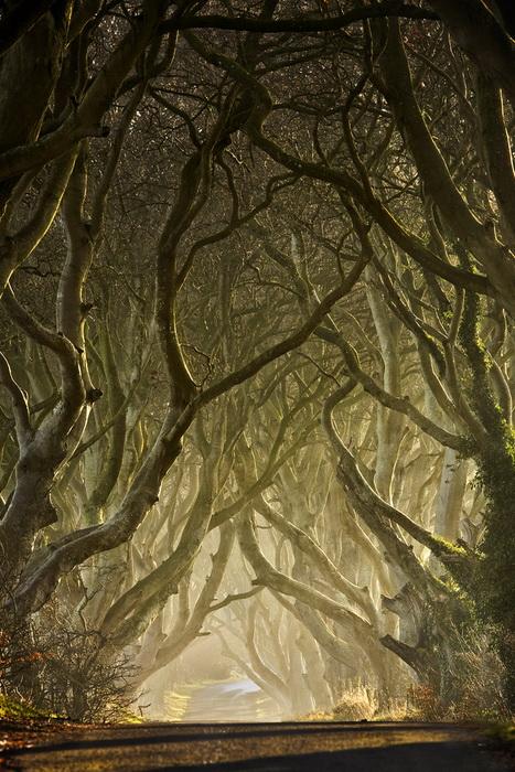 Мистическая аллея Дарк Хэджес. Фотография от Gary McParland