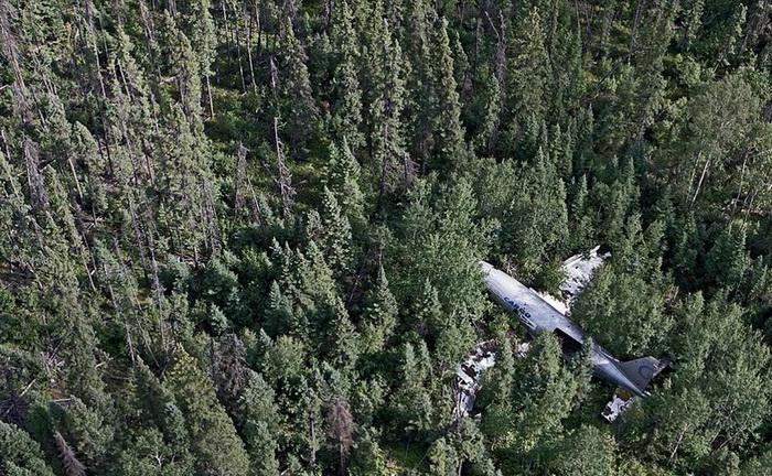 Заброшенные самолеты давно стали *частью* окружающей природы