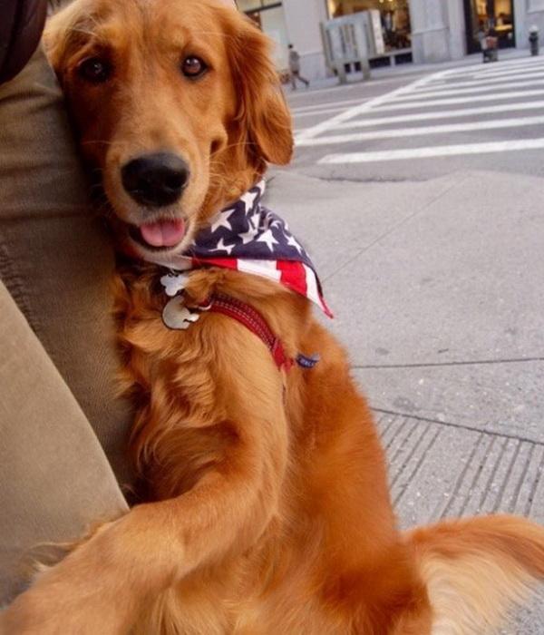 Лубутен - пес из Нью-Йорка, который обожает обнимать людей