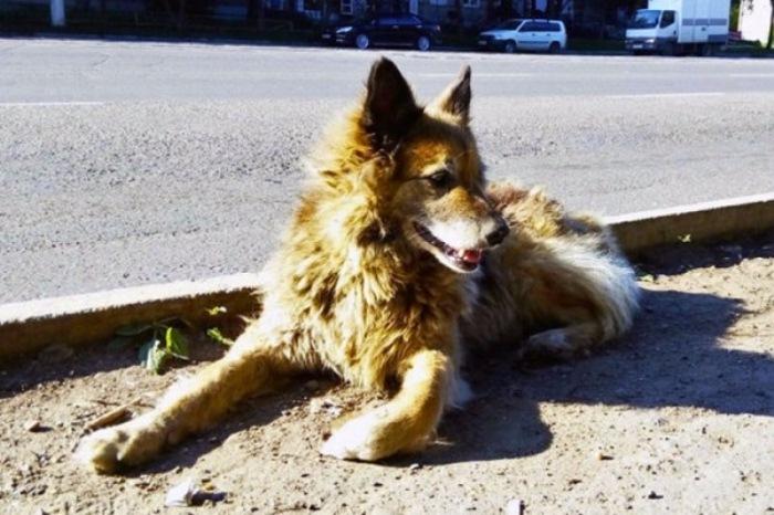 Найда - пес-герой Комсомольска-на-Амуре.