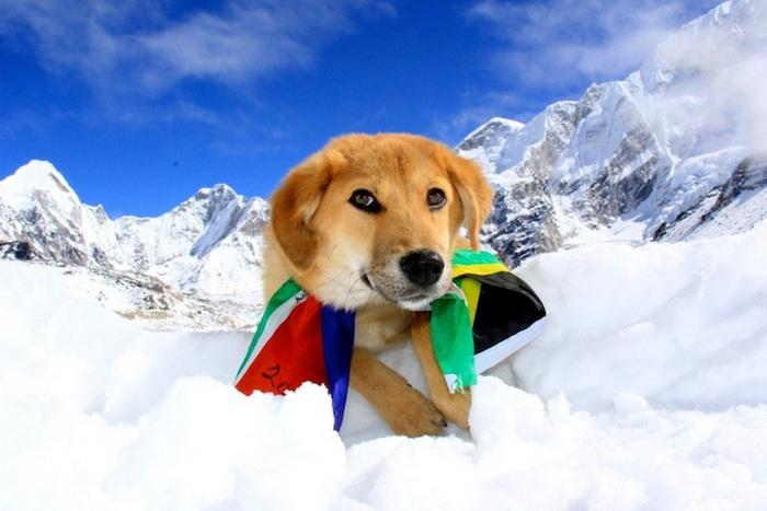 Пес-альпинист