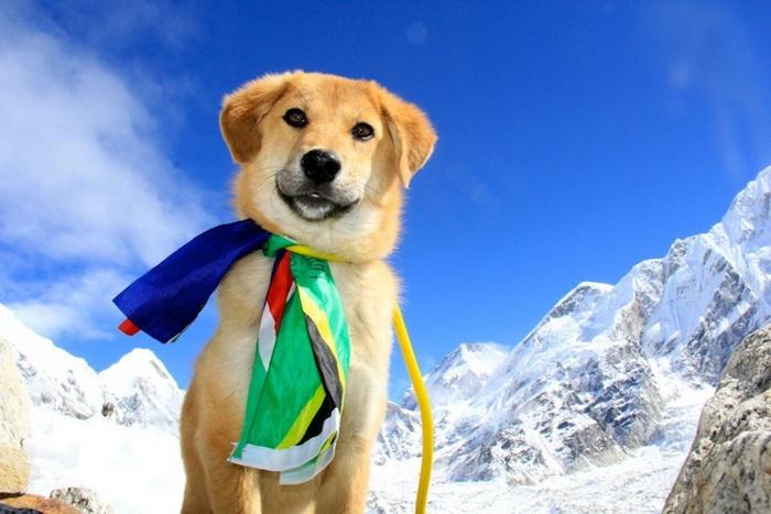 Пес Рупи - первая собака в мире, покорившая Эверест