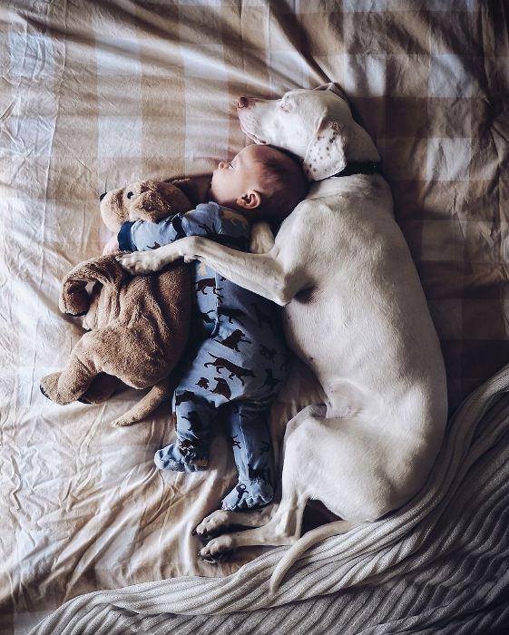 Пес - верный охранник. Фото: artfile.ru