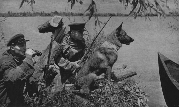Собаки-воины. Фото: slavyane.org