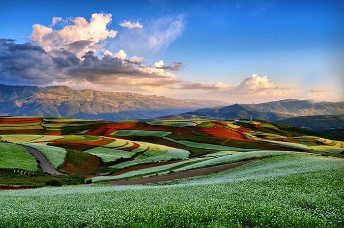 Необычные террасные поля