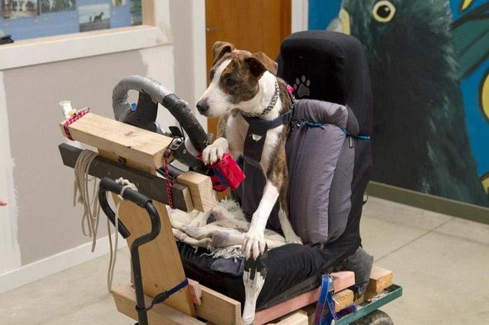 Азы вождения собаки-автомобилисты постигали на деревянной тележке