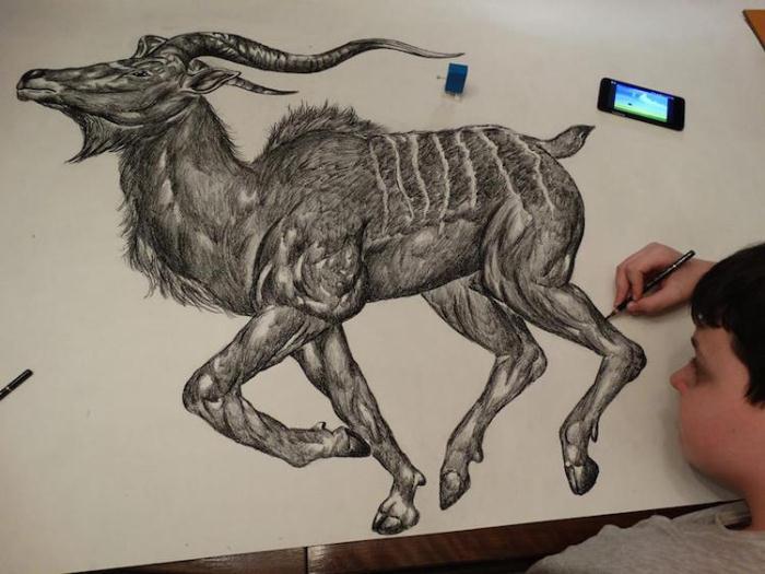 Все рисунки выполнены с анатомической точностью.