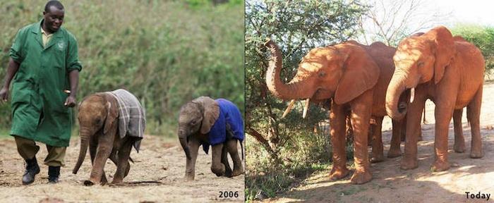 До и после: архив Фонда живой природы Дэвида Шелдрика